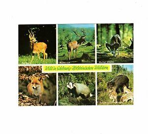 AK Ansichtskarte Wild in Schleswig-Holsteinischen Wäldern