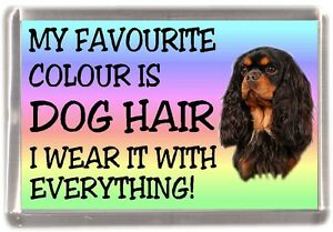 Cavalier-King-Charles-Spaniel-Fridge-Magnet-034-My-Favourite-Colour-is-Dog-Hair-034