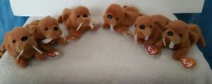 Ty beanie babies lot of 6 tusk 2 are tuck misprint