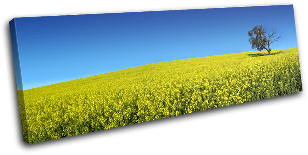 Field Landscapes SINGLE TELA parete parete parete arte foto stampa ddbc9a