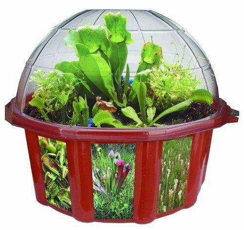 NEW Dome Terrariums Carnivgoldus Plants FREE SHIPPING