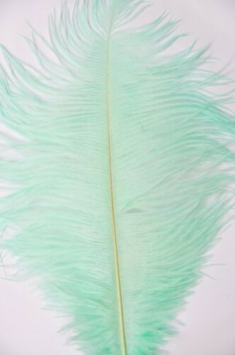 GA, USA Mint Green Ostrich Feathers 12-14 inch 100 Pieces
