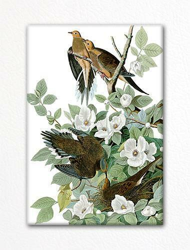 Mourning Dove Audubon Illustration Fridge Magnet