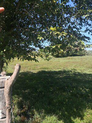 Rancho de 10    87   20 hectareas en Carretera Villahermosa Escarcega por el Ejido San Joaquin