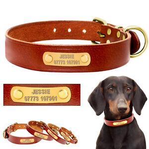 Hundehalsband-mit-Namen-Telefonnummer-GRAVUR-Personalisiert-Hund-Hundenamen-S-L