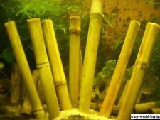** 5 ** Stangen a` 20 cm Bambus - Bamboo, Garnelen, Welse / Rückwand bauen *NEU*