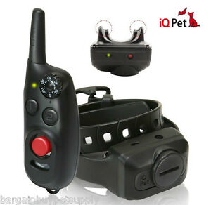 Dogtra-iQ-CLiQ-Clicker-Remote-Dog-Shock-Collar-Trainer-Clicker-amp-eCollar-in-One
