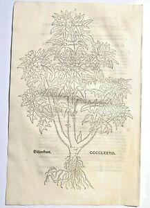 FUCHS  1543 Antique Woodcut Print -  Floral Plant Botanical Herbal *VERY RARE*