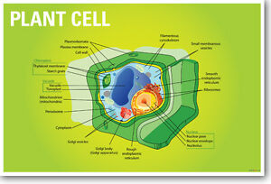 Education Chart of Biology for Animal and Plant Cell Diagram ...