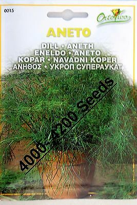 4000-4200 seeds Superior Quality Very Fresh seeds. Dill Herb Seeds