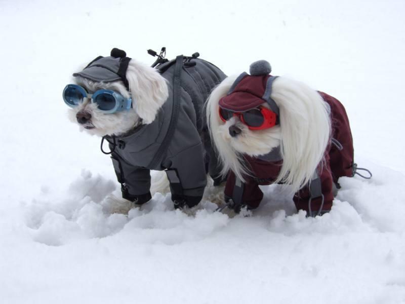 NORDPOL Wintermantel Schneemantel Hundemantel Mantel für Hunde