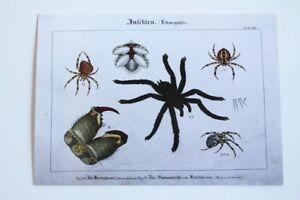 Pk-Postcard-Unused-Insects-Lifesize-Garden-Spider-Buschspinne-Surinamese