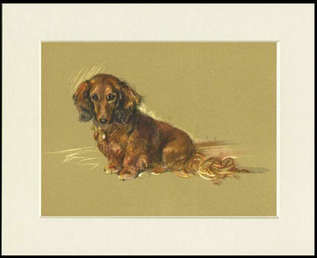 DACHSHUND WIRE HAIRED DOG CHARMING PRINT MOUNTED READY TO FRAME