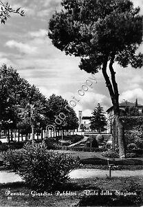Cartolina - Postcard - Pesaro - Viale della Stazione - Giardini - anni '50 - Italia - Cartolina - Postcard - Pesaro - Viale della Stazione - Giardini - anni '50 - Italia