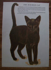 Burmese Cat Print Gladys Emerson Cook Tails Up Bookplate 1954 Unmatted Adorable
