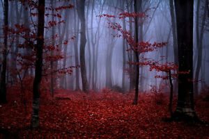 Image Is Loading Foggy Forest Red Autumn Foliage 3D Full Wall