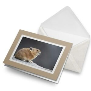 Greetings-Card-Biege-Pika-Rabbit-Hamster-Yellowstone-16438