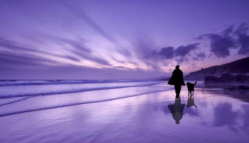 Australian art print ocean seascape sunrise sunset purple dog walk beach sea