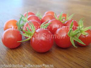 Striped Cavern Tomate 10 Semi Tipologia Antica Molto Raro Semi di Pomodoro