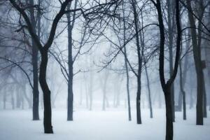 Winter-forest-in-fog-Poster-24x36-inch