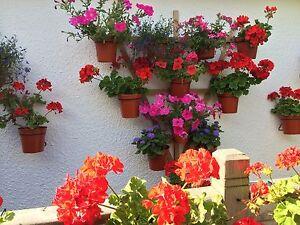 6 Plant pot holdershangersringsHANG PLANTS on a TRELLIS or Pallet for 5034 pots - WIMBORNE, United Kingdom - 6 Plant pot holdershangersringsHANG PLANTS on a TRELLIS or Pallet for 5034 pots - WIMBORNE, United Kingdom