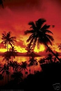beautiful-PALM-TREES-at-SUNSET-POSTER-FIJI-BEACH-TREE