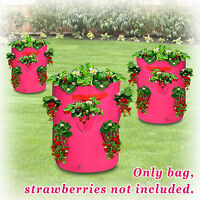 3pc Herb Strawberry Planter Grow Bag Garden Growbag Plant Pot
