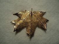 Genuine Maple Leaf Pin Gold Beautiful