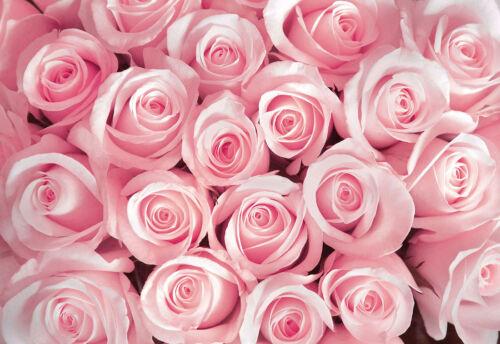 Papier Peint papiers peints photos papier peint rose Poster fleurs épines de la Rose 3fx2168p8