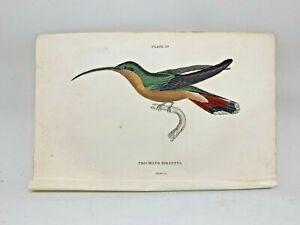 1st-Ed-Hand-colored-Jardine-039-s-Natural-History-1834-Hirsutus-Hummingbird-29