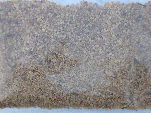 Lycium chinense Goji-Beere ANTI-AGING günstig 1000 Samen der echten Gojipflanze