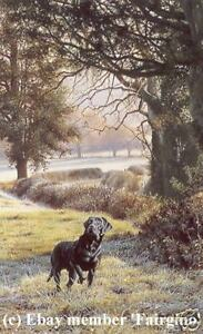 Steven-Townsend-WOODLAND-CALL-Black-Labrador-Labs-Dogs