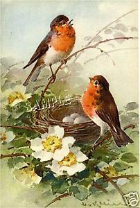 Vintage BIRD Robin FLOWER Dogwood *CANVAS* Art LARGE