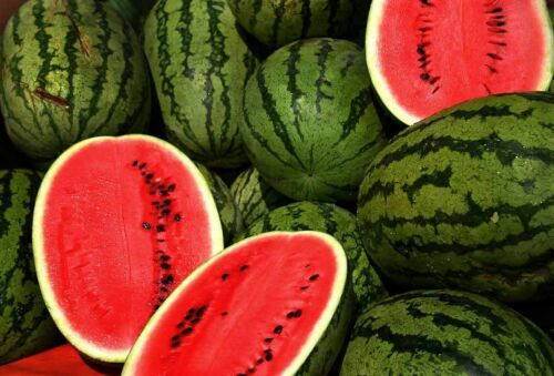 20 CAL SWEET SUPREME WATERMELON Red Citrullus Lanatus 30 lb Melon Fruit Seeds