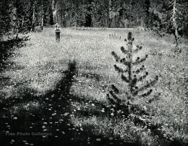 1959 Vintage ANSEL ADAMS Mountain Meadow Child Landscape Photo Gravure Art 11x14