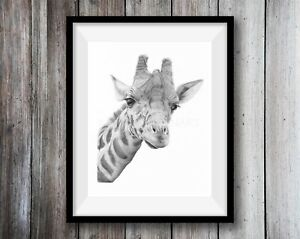 GIRAFFE ART PRINT Pencil Drawing Wildlife Animal Sketch A4 Wall Illustration