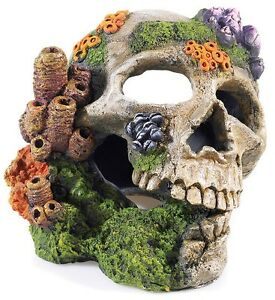 ... Aquariums > Decorations > See more Aquarium Fish Tank Human Skull