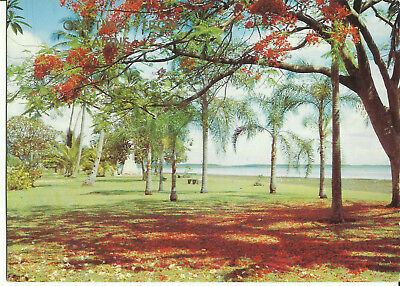 Postcard - Cairns Esplanade Showing Anzac Memorial, Cairns, Qld, Australia