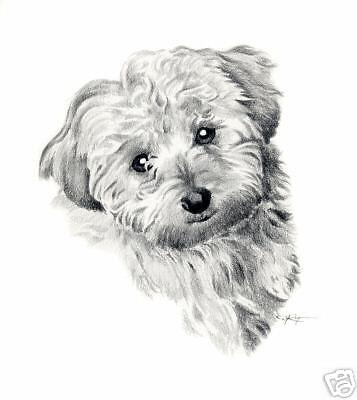 COCKAPOO Dog Drawing ART 11 X 14 LARGE Print by Artist DJR
