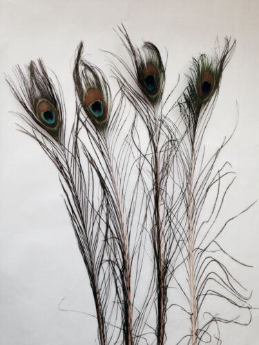 UK Stock LONG Peacock Eye Feathers DEFECTIVE Bulk 500//1000 x 25-35 inch