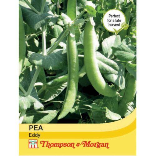 Thompson & morgan-légumes-pois eddy - 300 graines