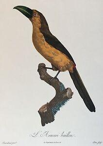 L-039-Aracari-Gag-after-Barraban-Engraved-per-Peree-circa-1961-Bird-Bird