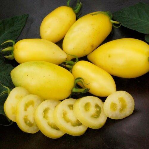 Vegetable - Tomato - Cream Sausage - 12 Seeds