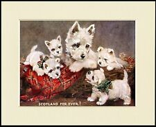 WESTIE WEST HIGHLAND WHITE TERRIER MUM AND PUPS DOG PRINT MOUNTED READY TO FRAME