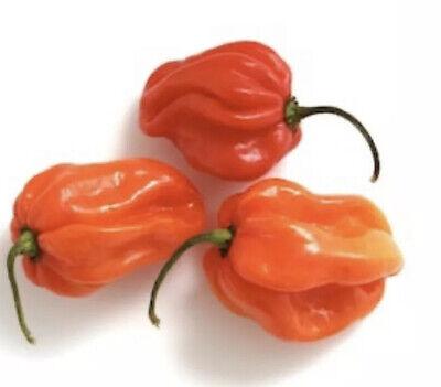 25 Authentic Red Jamaican Scotch Bonnet Pepper Seeds-R 115