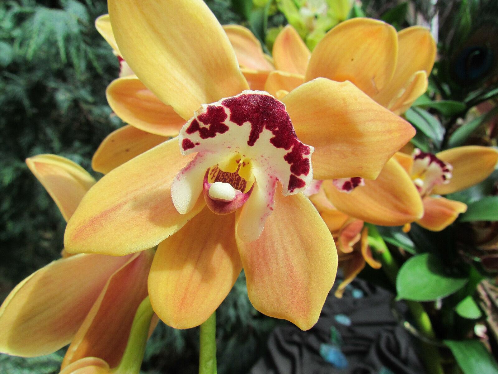 100PCS Orchid Flower Seeds 6 Kinds MIX Color Garden Decor Plant Exotic New