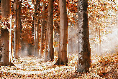 Framed Print - Leafy Path through a Forest an Autumn Time (Picture Poster Art)