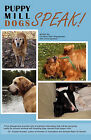 Puppy Mill Dogs Speak!: Happy Stories and Helpful Advice by Christine Palm Shaughness (Paperback / softback, 2010)