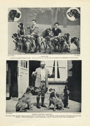 GERMAN WIREHAIRED POINTER BREEDERS AND THEIR DOGS OLD ORIGINAL 1934 DOG PRINT