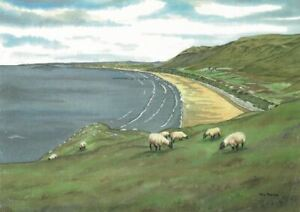 Rhossili sheep, Gower, Swansea - Greetings Card - Tony Paultyn